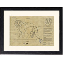Personalized Framed Cat Breed Architectural Renderings - Scottish Fold