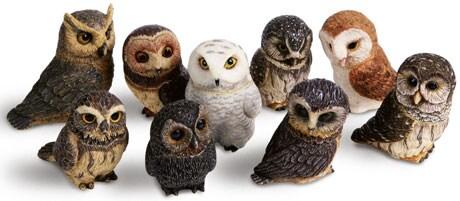 Signals - Owls