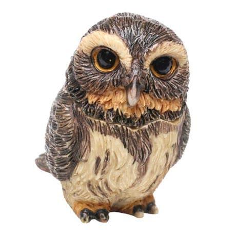 Owl Pot Bellys® Boxes - Pygmy Owl