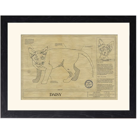 Personalized Framed Cat Breed Architectural Renderings - Devon Rex