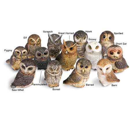 Owl Pot Bellys® Boxes - Spotted Owl